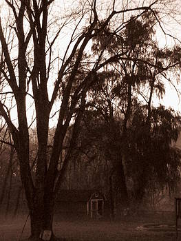 Shane Brumfield - Dusk Fog