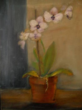 Dutch Orchid by Viorica Stampfel