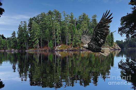 Dan Friend - Eagle flying front of island