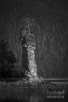 Darcy Michaelchuk - Eagle in Tree on Hoodoo