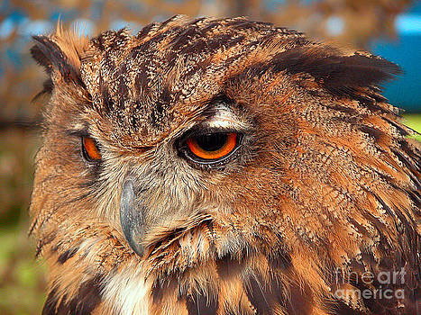 Eagle Owl by Graham Taylor
