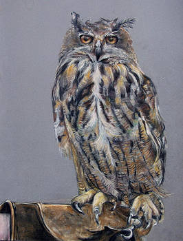 Eagle Owl by Tanya Patey