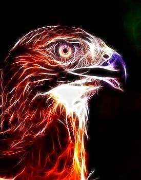 Eagle by Ratan Sonal