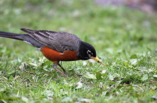Karol  Livote - Early Bird Gets The Worm