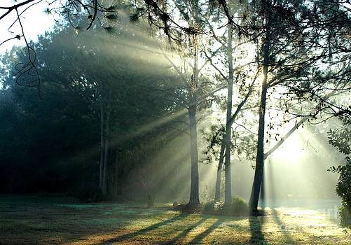 Early Morning Sun Rays by Theresa Willingham