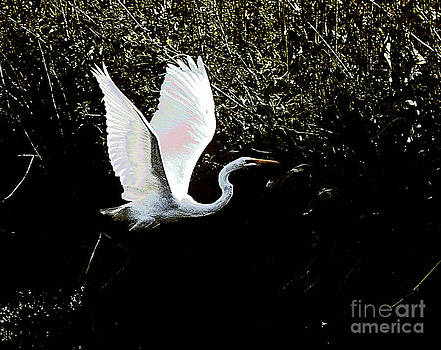 Egret  by Absolute Photography