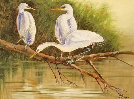 Egret Trio by Sarah Grangier