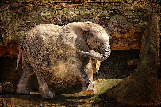 Larry Marshall - Elephant Calf