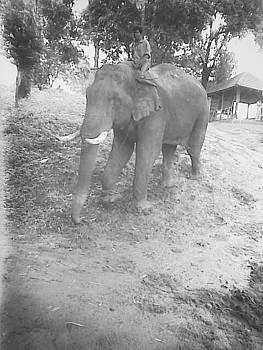 Elephant safari by Prashant Upadhyay