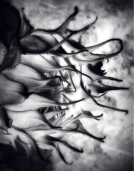 Emanate by Sian Lindemann