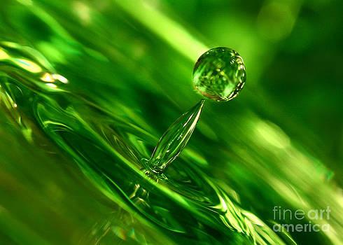 Emerald Jewel by Casey Hanson