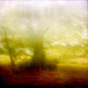 DOUG  DUFFEY - ENCHANTED FOREST