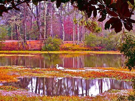 Enchanted Forest by Frank SantAgata