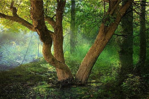 Enchanted Forest by George Lai