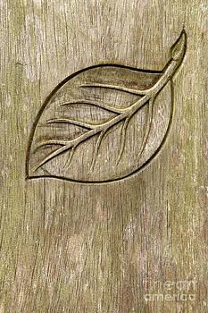 Gaspar Avila - Engraved leaf