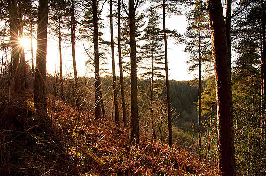 Svetlana Sewell - Evening Sun Rays