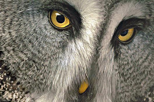 Eyes of Gray by Bev  Brown
