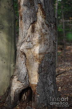 Tannis  Baldwin - Face in the Tree