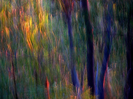 Michelle Wrighton - Faeries in the Forest