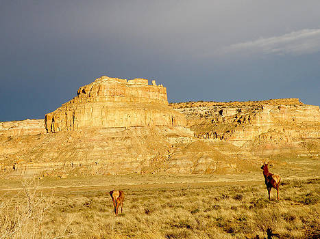 Fajada Butte at Sunset with Elk by Feva  Fotos