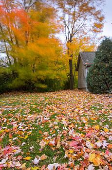 Fall Carpet by Amit Khanna