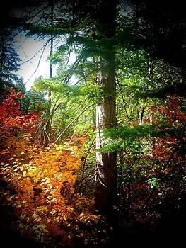Fall Colors by Jennifer Jeffris