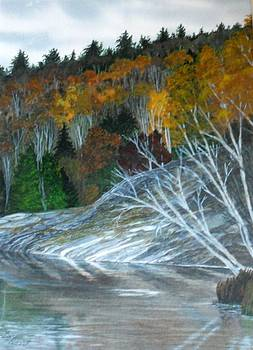 Fall Colours by Fay Reid