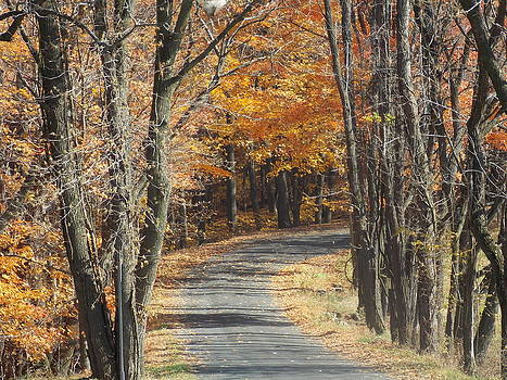 Fall Country Road by Angelika MacDonald