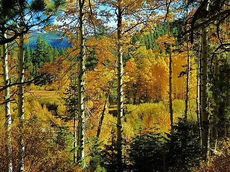 Fall in the Sierras by Helen Carson