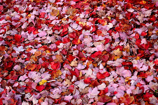 Fall Leaves by Frank DiGiovanni