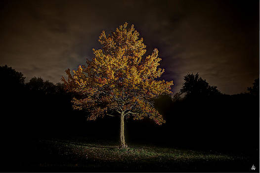 Fall Tree by Nicholas  Grunas
