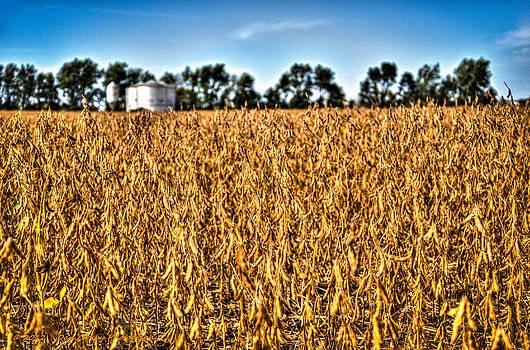 Fall Soy Field by Dan Crosby