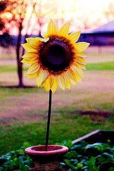 Fall Sun by Hannah Miller