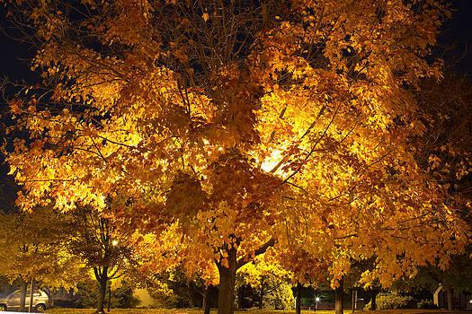 Fall Tree by Amit Khanna