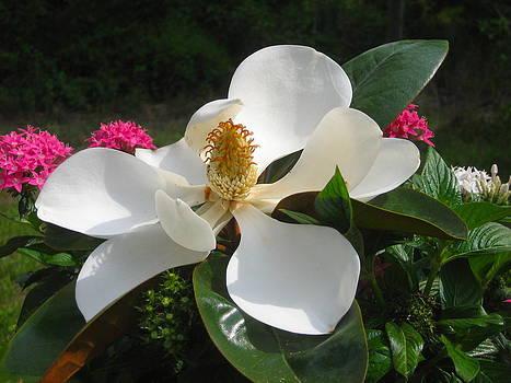 Fallen Magnolia by Claire Pridgeon