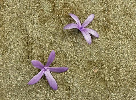 Fallen Stars by Lynn Wohlers