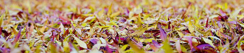 Steven Poulton - Fallen willow tree leaves