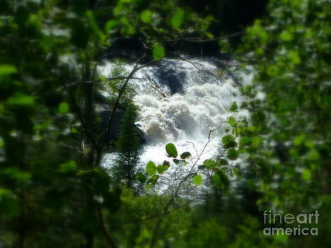 Sue Wild Rose - Falls In Forest Frame