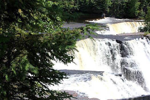 Sue Wild Rose - Falls