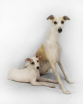 Father and Son Whippets by John Clum