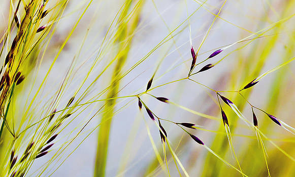 Feather Grass by Mariola Szeliga