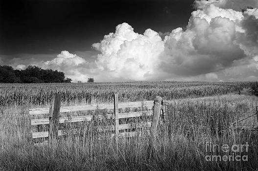 Fence. Field. Sky- Kent County Ontario by Mark Clifford