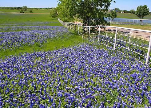 Lynnette Johns - Fenceline flowers
