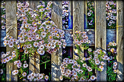 Fences And Flowers Nr.3 by Leopold Brix