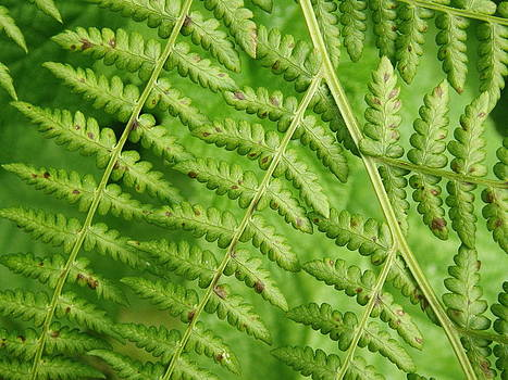 Fern Green by Cheryl Perin