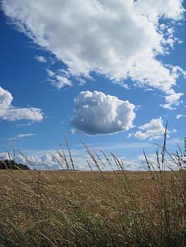 Field of Barley by Jennifer Watson