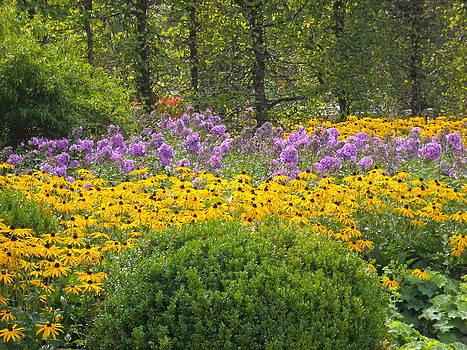 Field of Flowers by Liliana Ducoure