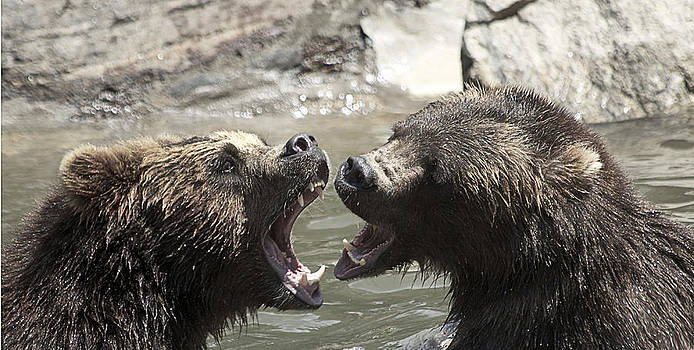 fight Bears by Yosi Cupano