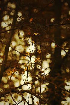 Filtered Light by Vail Joy