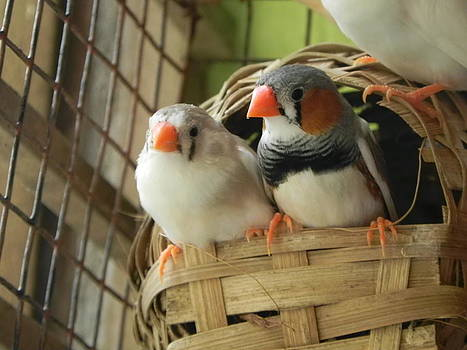 Finches in their Nest by Arindam Raha